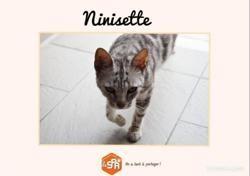 Ninisette (réservée), Chat européen à adopter