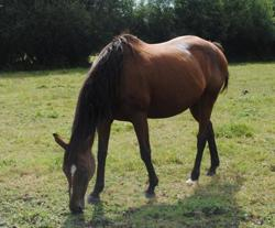 Muslin, Animal cheval à adopter