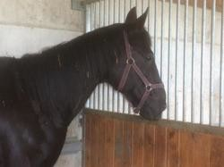 Kames meslois, Animal cheval à adopter