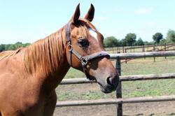 Mahjong, Animal cheval à adopter