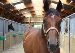 Tralala, Animal cheval à adopter