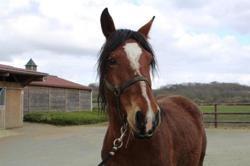Gina, Animal cheval à adopter
