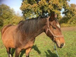 Vittoria, Animal cheval à adopter