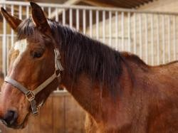 Passion, Animal cheval à adopter