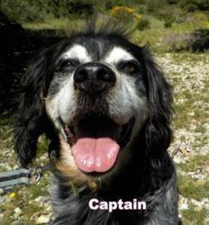 Captain , Chien à adopter