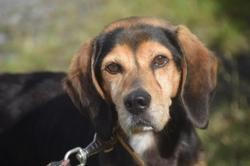 Jay z, Chien beagle à adopter