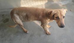 Rockette, Chiot berger à adopter