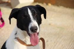 jango chien chien crois moyenne race adopter dans la r gion rh ne alpes. Black Bedroom Furniture Sets. Home Design Ideas