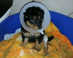 lexie chiot chien crois moyenne race adopter dans la r gion rh ne alpes. Black Bedroom Furniture Sets. Home Design Ideas