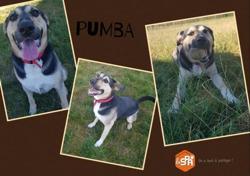 Pumba, Chien croisé / autre (berger) à adopter