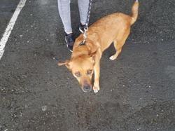 Naia, Chien croisé / autre (chien courant) à adopter