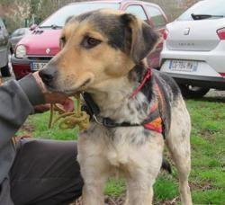 Djoumba , Chien croisé / autre (husky siberien) à adopter