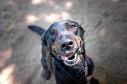 Sally (réservée), Chien croisé / autre (labrador (retriever)) à adopter