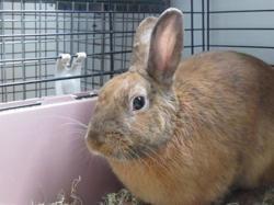 Peter, Animal lapin à adopter
