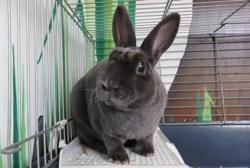 Chouchounet, Animal lapin à adopter