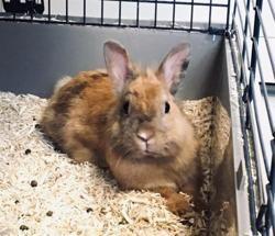 Poppy, Animal lapin à adopter