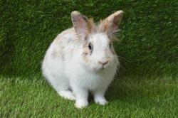 Banzai, Animal lapin à adopter