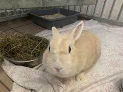 Colchique 259, Animal lapin à adopter