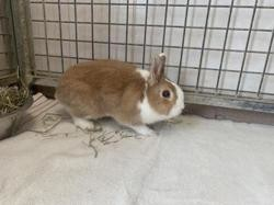 Noisette 260, Animal lapin à adopter