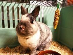 Vinci, Animal lapin à adopter