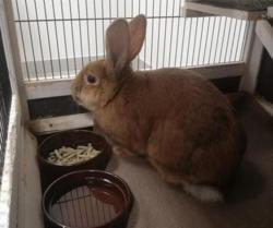 Melo qnac, Animal lapin à adopter