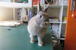 Era, Animal lapin à adopter