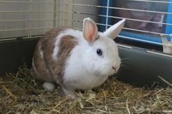 Ma, Animal lapin à adopter