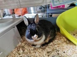 Carlo réservé, Animal lapin à adopter
