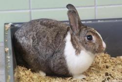 Rillette, Animal lapin à adopter