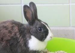 Griotte, Animal lapin à adopter