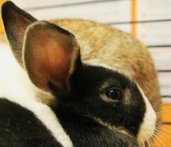 Pooky qnac, Animal lapin à adopter