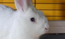 Azalee, Animal lapin à adopter