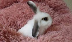 Ananas, Animal lapin à adopter