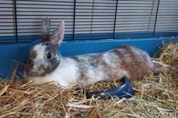Lutin, Animal lapin à adopter