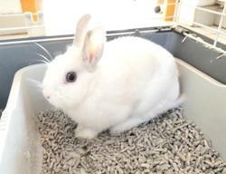 Tartare, Animal lapin à adopter