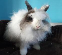 Edge cac785, Animal lapin à adopter
