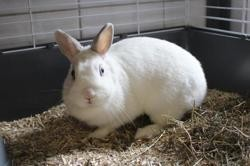 Talica, Animal lapin à adopter