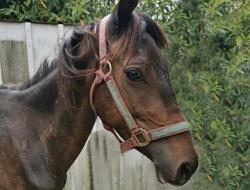 Irissa, Animal poney à adopter