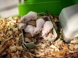 Roquefort, Animal souris à adopter