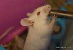 Nona, Animal souris à adopter