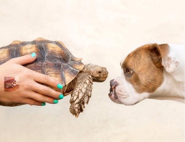 Tortue et chien
