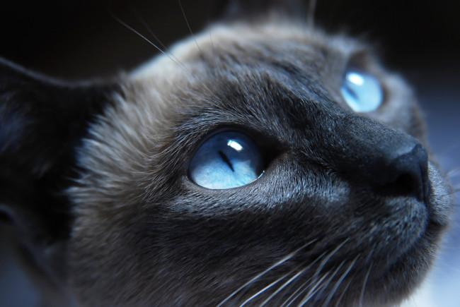 Chats avec des yeux magnifiques