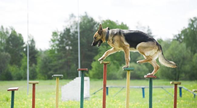 10 chiens qui adorent pratiquer un sport