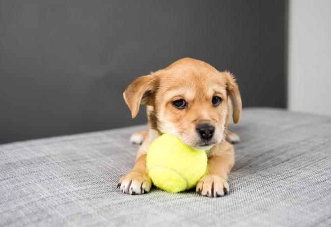 10 chiens fous de leur balle de tennis