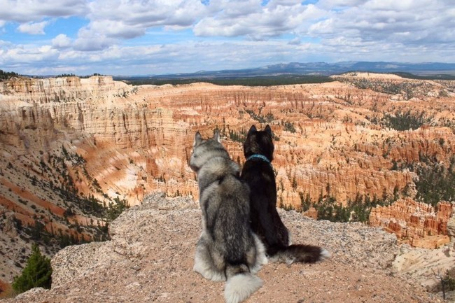 L'incroyable périple de deux Husky aux Etats-Unis et Canada