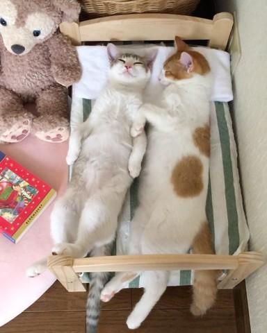 2 chatons dorment dans leur lit IKEA