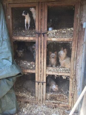 150 chiens sauvés d'une usine à chiots hongroise