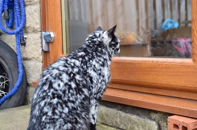 Scrappy, le chat noir devenu blanc