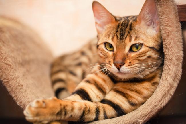 20 magnifiques chats roux