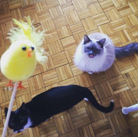 Chats de Pâques